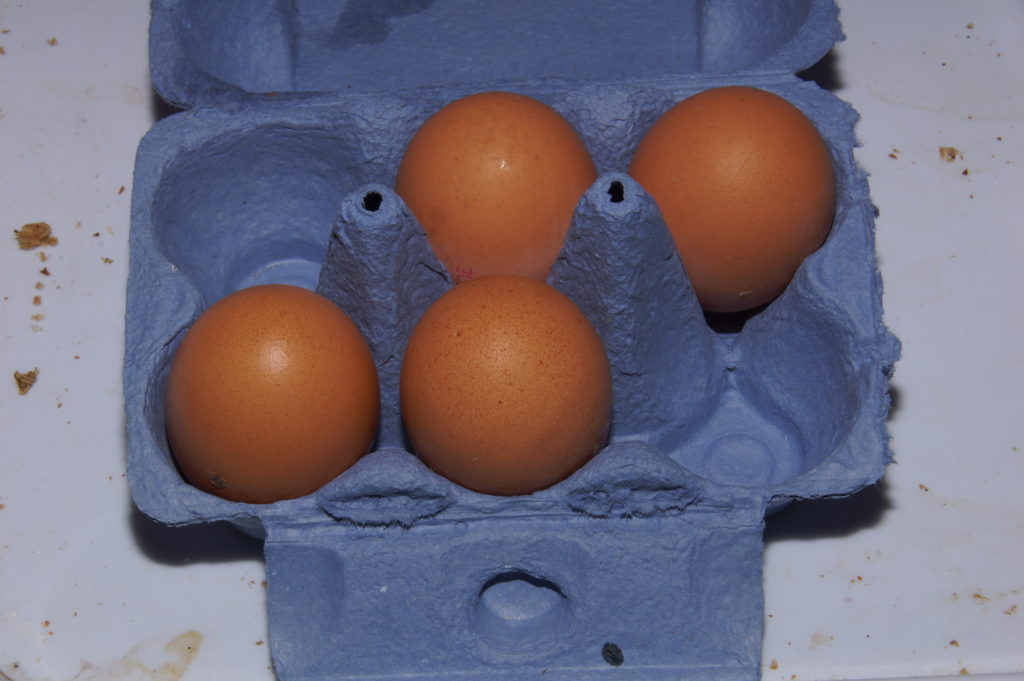egg carton with four eggs